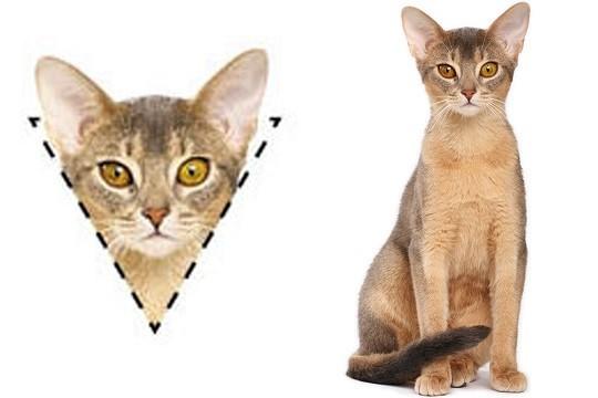 Τα τριγωνικά πρόσωπα