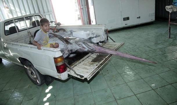 Έλληνας ψαράς έπιασε ξιφία 360 κιλών στον Αστακό