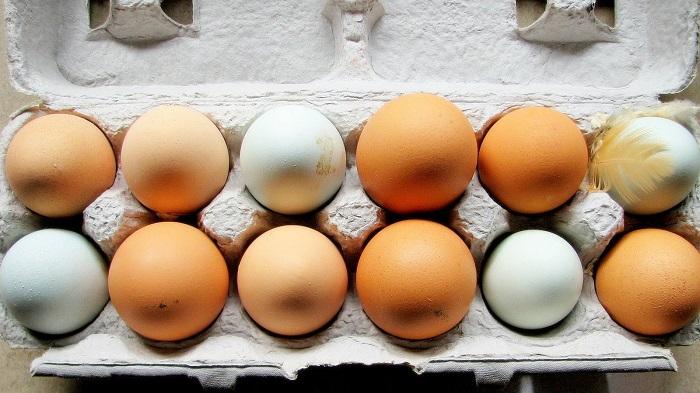 Οι 6 συχνότερες απορίες για το ταπεινό αυγό